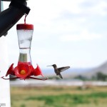 RV Hummingbird Feeder